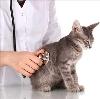 Ветеринарные клиники в Нижнем Часучее